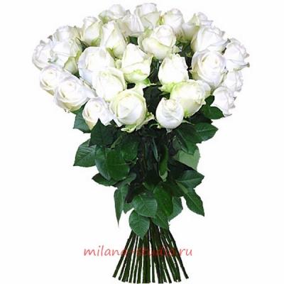 Букет из 25 шт белых роз