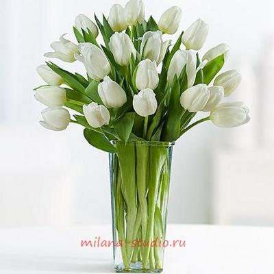 Букет из 25 шт белых тюльпанов